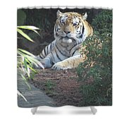 Beyond The Branches Shower Curtain