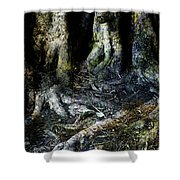 Beyond The Forest Edge Shower Curtain