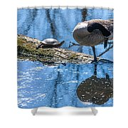 Bff Turtle And Canda Goose Shower Curtain