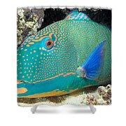 Bicolor Parrotfish Shower Curtain