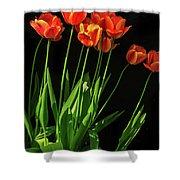 Bicolor Tulips Shower Curtain