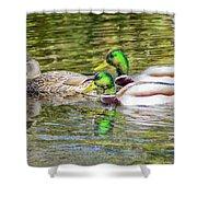 Bidwell Ducks In Fall Shower Curtain