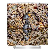 Bidwell Turtles In Fall Shower Curtain