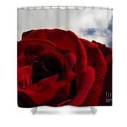 Big And Beautiful Shower Curtain