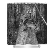 Big Basin 2 Shower Curtain
