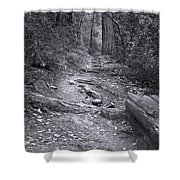 Big Basin Redwoods Sp 1 Shower Curtain