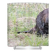 Big Beaver Shower Curtain
