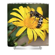 Big Bee On Yellow Daisy Shower Curtain