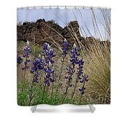 Big Bend Bluebonnets Shower Curtain