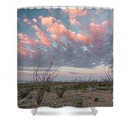 Big Bend Sunrise-blooming Ocotillo Shower Curtain