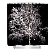 Big Birch Shower Curtain