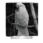 Big Bird Shower Curtain