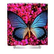 Big Blue Butterfly On Kalanchoe Flowers Shower Curtain