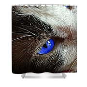 Big Blue Eyes Cat Shower Curtain
