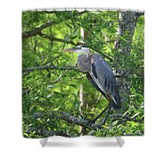 Big Blue In Green Tree Shower Curtain