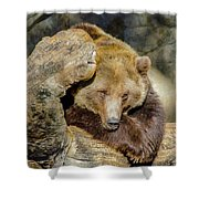 Big Brown Bear Shower Curtain