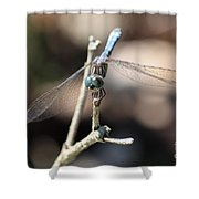 Big Bug Eyes Shower Curtain