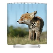 Big But Little Shower Curtain