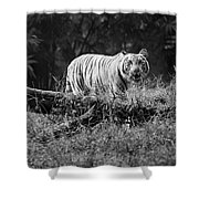 Big Cat In The Woods Shower Curtain