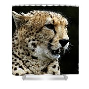 Big Cats 101 Shower Curtain