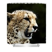 Big Cats 102 Shower Curtain