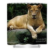 Big Cats 114 Shower Curtain