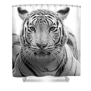 Big Cats 115 Shower Curtain