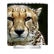 Big Cats 51 Shower Curtain