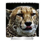 Big Cats 53 Shower Curtain