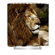 Big Cats 69 Shower Curtain