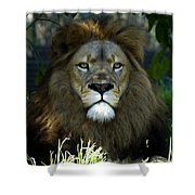 Big Cats 79 Shower Curtain