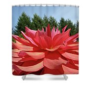 Big Dahlia Flower Blooming Summer Floral Art Prints Baslee Troutman Shower Curtain