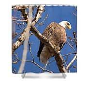 Big Eagle Shower Curtain