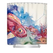 Big Eye Squirrelfish Shower Curtain