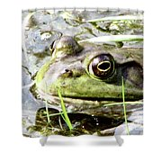 Big Eyed Frog In A Marsh Shower Curtain