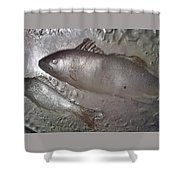 The Perfect Shower Curtain-big-fish-also At Big.fishery.webs.com Shower Curtain