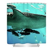 Big Fish Shower Curtain