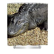 Big Gator Shower Curtain