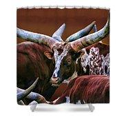 Big Horn Shower Curtain