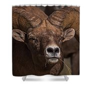 Big Horn Grazing Shower Curtain