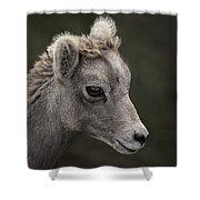 Big Horn Lamb Shower Curtain
