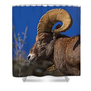 Big Horn Looking Down Shower Curtain