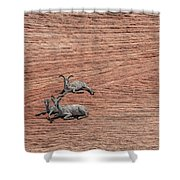 Big Horned Sheep Of Zion Shower Curtain
