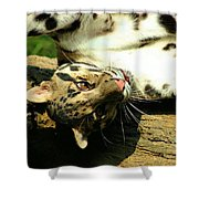 Big Kitty Fun Shower Curtain