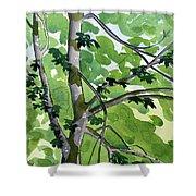 Big Leaf Maple Shower Curtain
