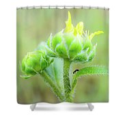 Big Life Shower Curtain