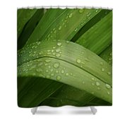 Big Lily Shower Curtain