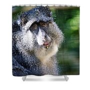 Big Lunch  Shower Curtain