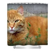 Big O Shower Curtain