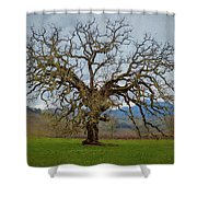 Big Oak Shower Curtain